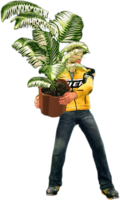 Dead rising small fern tree holding