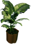 Dead rising Small Fern Tree