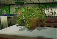 Dead rising potted plant small
