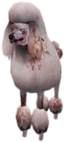 Zombie poodle CTYD