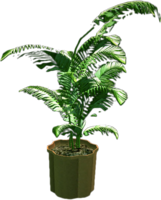 Dead rising Small Fern Tree 98