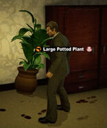 Dead rising in case west large potted plant