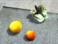 Dead rising orange grapefruit and lettuce