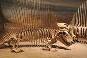 Dimetrodon pair