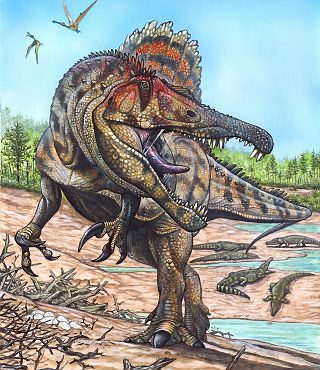 dating dinosaurs wiki 42 index fossils 43 relative dating 44 absolute dating  ripples, tracks,  petrified wood, dinosaur bones and hard-shelled invertebrates.