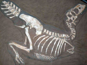 TarbosaurusP1050352