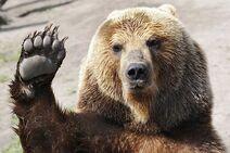 257708-bear