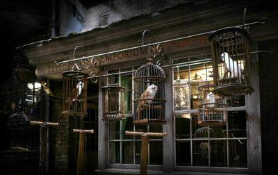 Diagon Alley - Eeylops Owl Emporium