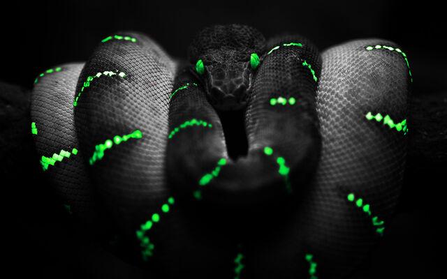 File:Meeka in snake form.jpg