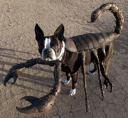 Echo-sccorpion-dog
