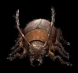 Giant beetle Tjaf