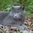Sintelvel-is-de-beste's avatar
