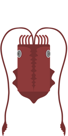 Giantsquid