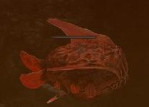File:Boss fish example.jpg