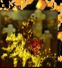 SE4 icon