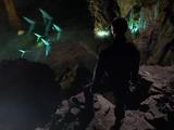 Underground aquatic creature