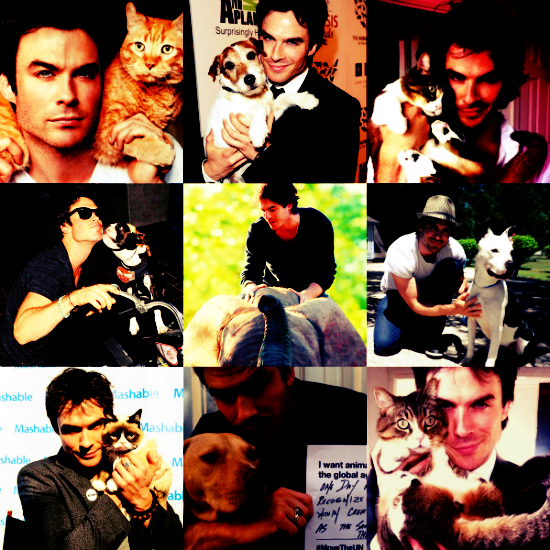 Dani bday collage