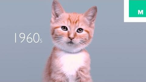 100 Years of Kitten Beauty in 60 Seconds