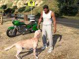 Namenloser Hund