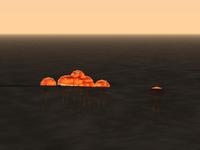Feuerquallen