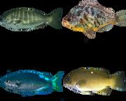Fische, GTA V
