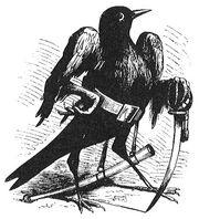 Caim in bird form