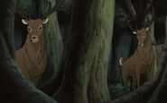 Naara-Wald01