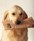 DogPaper
