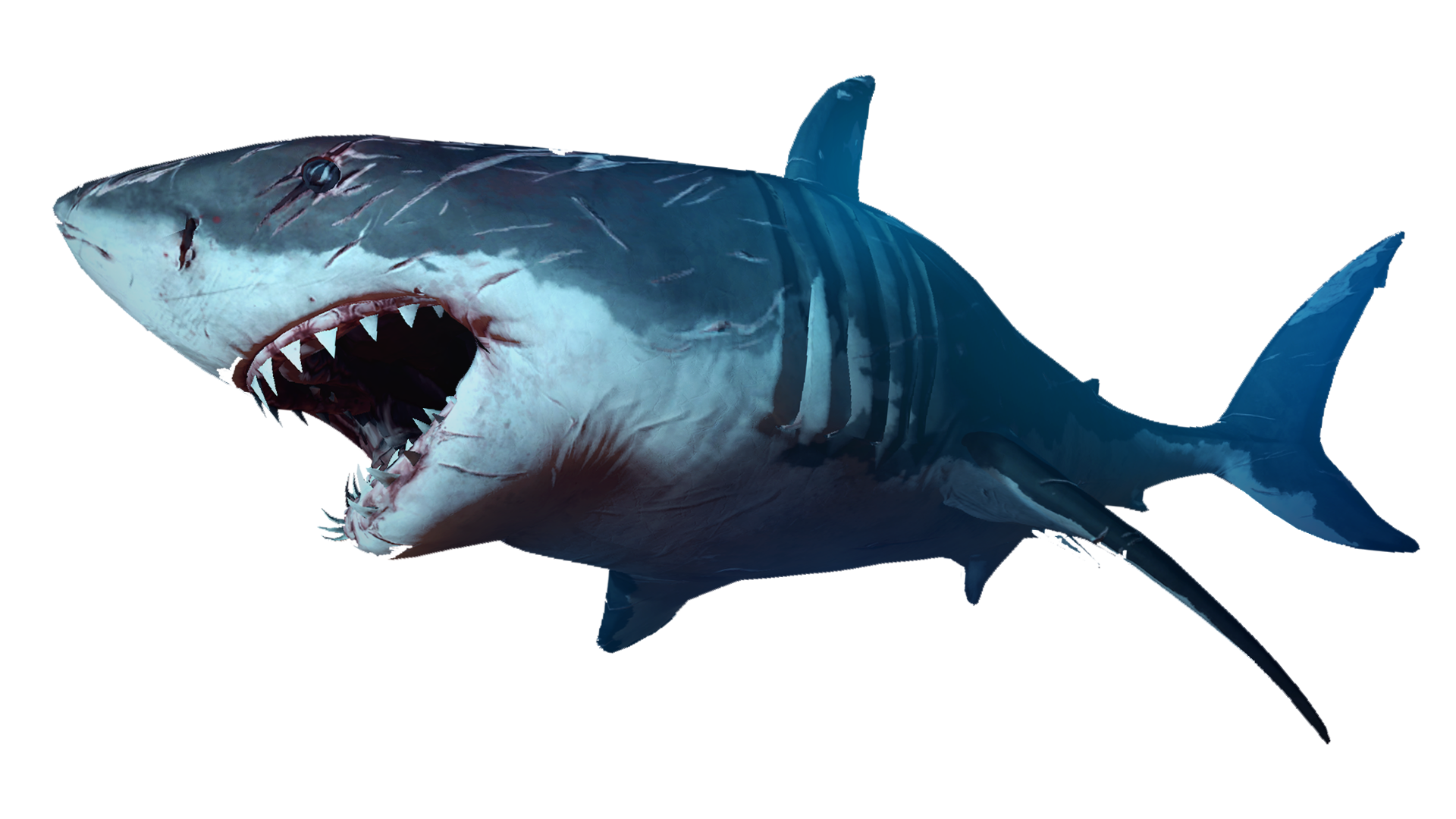 The Shark | Depth Wiki | FANDOM powered by Wikia
