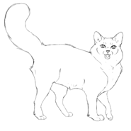 Guérisseur - Ragdoll