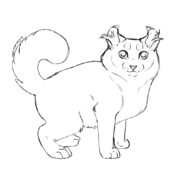 Chaton - American curl 3