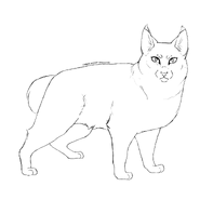 Horde - American bobtail