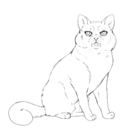 Soigneur - British shorthair 2
