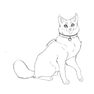 Kittypet - Amercian bobtail 2 (collier)