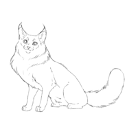 Apprenti - Main coon 1