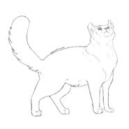 Garde Caverne - American curl 1