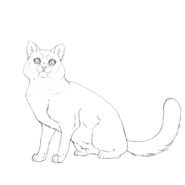 Apprenti - british shorthair 2