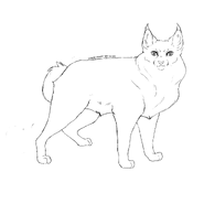 Horde - American bobtail 1