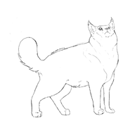 Garde Caverne - American bobtail 2