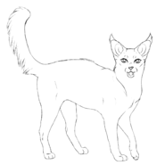 Guérisseur - Javanese 3