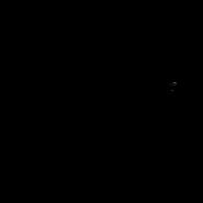 Guérisseur - Oriantal Shorthair 2