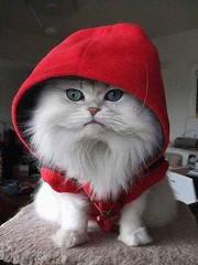 Hoodie-red-cat
