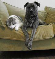 Trillium Poncho cat dog