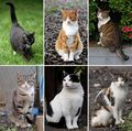603px-Collage of Six Cats-01.jpg