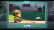 Puppypreview