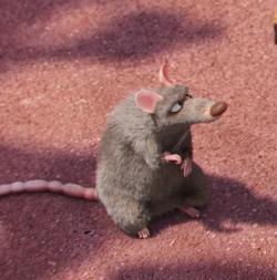 Poochi the rat -1