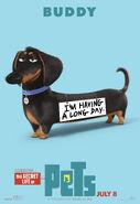 The Secret life of Pets 07