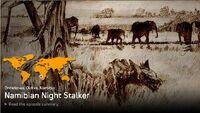 Namibian Night Stalker