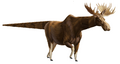 Paalka pack-moose.png