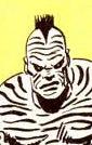 Zebra Man II
